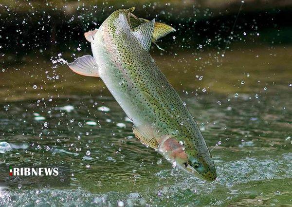 اشتغالزایی پایدار با پرورش ماهیان سردآبی