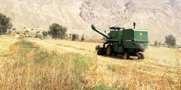 پایان برداشت جو در شهرستان پارسیان