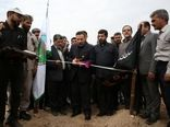 مالچ پاشی و نهالکاری ۱۱ هزار هکتار از بیابانها و شنزارهای خوزستان