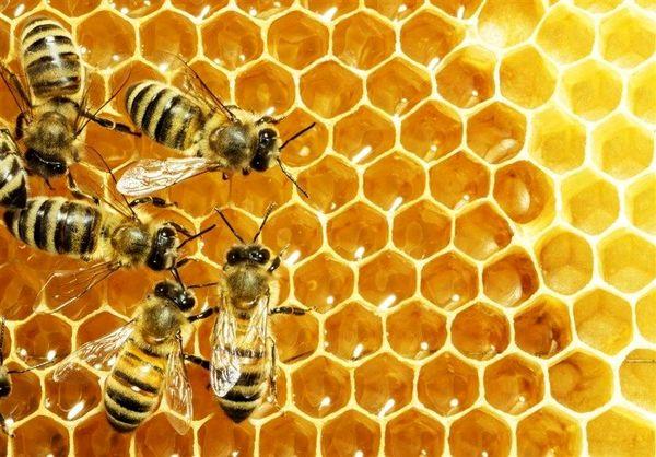 راه اندازی زنجیره ارزش در صنعت زنبورعسل فارس