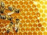رشد 24 درصدی تولید عسل در کشور