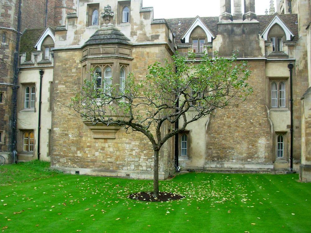 newtons-apple-tree-22