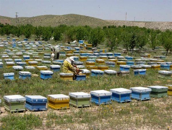 توسعه تولید عسل و پرورش بلدرچین در بوشهر