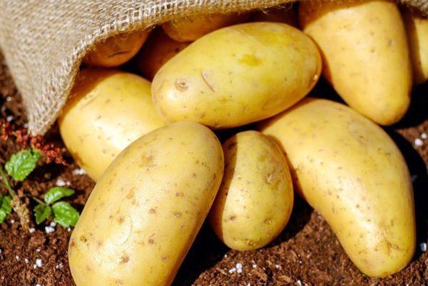 برداشت بیش از 550هزار تن سیب زمینی در سالجاری