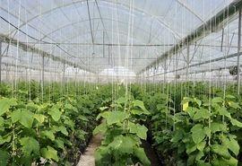 ۱۵ واحد گلخانه سبزی و صیفی در چهارمحال و بختیاری آماده بهرهبرداری شد