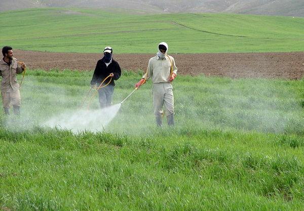 مبارزه با آفات در ۳۵۰ هزار هکتار از اراضی کشاورزی خراسان شمالی