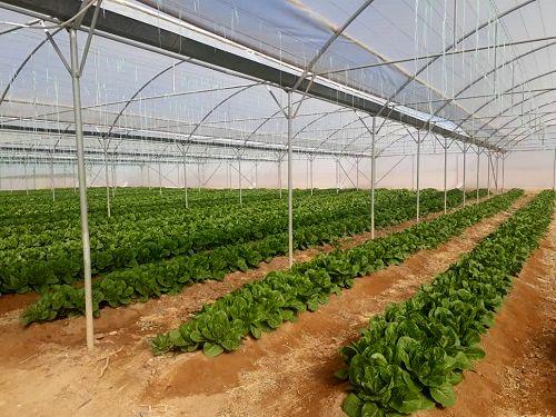 رشد 400 درصدی مساحت گلخانههای استان آذربایجان شرقی  در طول 7 سال گذشته