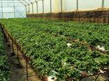 افزایش دو برابری سطح کشت سبزی و صیفی گلخانهای در چهارمحال و بختیاری