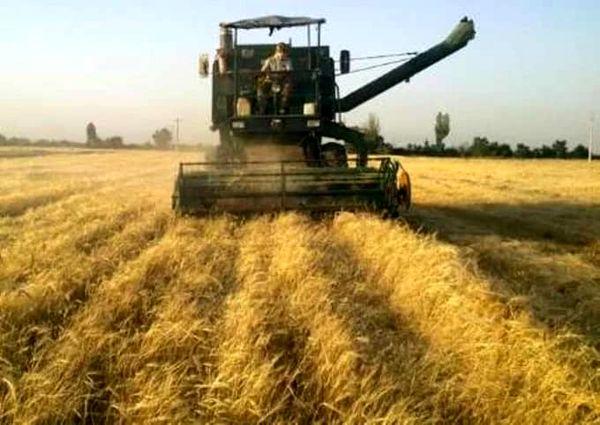آغاز  برداشت جو از مزارع کشاورزی استان قزوین
