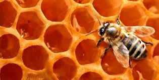 """عسل"""" رویین """"و """"شاه جهان"""" اسفراین از مرغوب ترین عسلهای کشور است."""