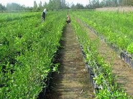 سالانه 2.5 میلیون اصله نهال در استان سمنان تولید میشود