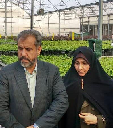 فعالیت 177 شرکت کشت و صنعت کشاورزی و دامپروری  در استان قزوین