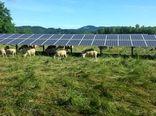 گیاهان زیر سایه پانلهای خورشیدی خوشحالترند
