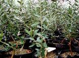 بهره برداران بخش کشاورزی شهرستان البرز با روند احداث نهالستان آشنا شدند