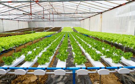 بهرهبرداری از 809 طرح و مجتمع گلخانهای در 8 استان