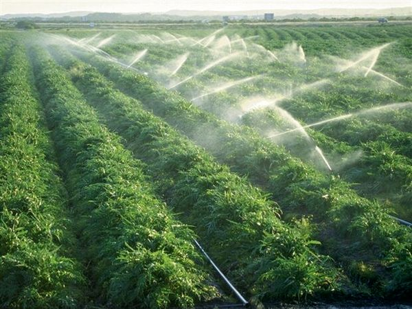 تجهیز 3 هزار و 700 هکتار از اراضی کشاورزی فارسان به سیستمهای نوین آبیاری