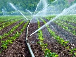 530 هکتار از اراضی شهرستان دشتی در سال جاری به آبیاری نوین تجهیز شدند
