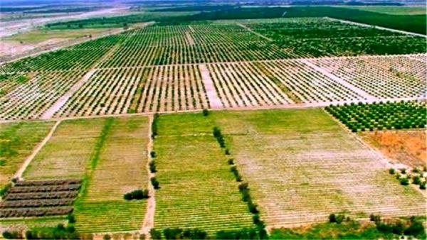 طرح کاداستر در سطح ۸۰ هزار هکتار اراضی شیروان اجرا شد