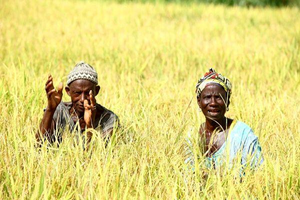 میزان انتشار گازهای گلخانهای با شیوه کشاورزی ارتباط دارد/ 9 کشور استوایی به اولویتبندی شیوههای کشاورزی اقدام میکنند