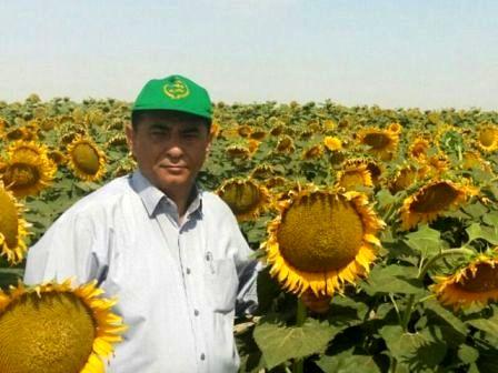 توسعه کشت آفتابگردان در گلستان
