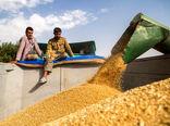 نرخ تضمینی خرید گندم افزایش یابد