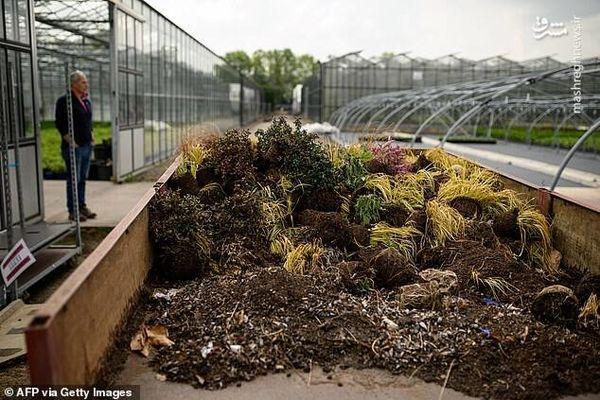 گل و گیاهان زینتی در زمره مشاغل گروه یک قرار گیرد