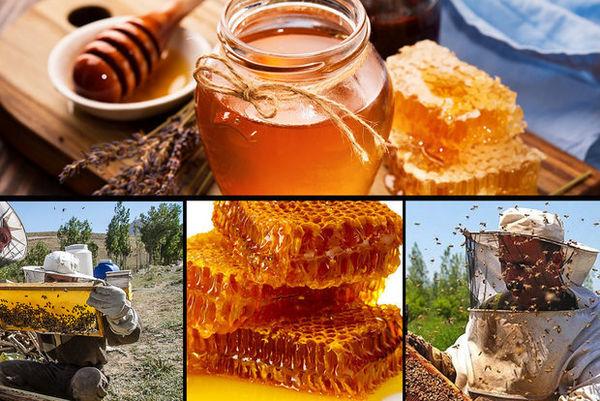 بورس عسل در آینده نزدیک راهاندازی میشود