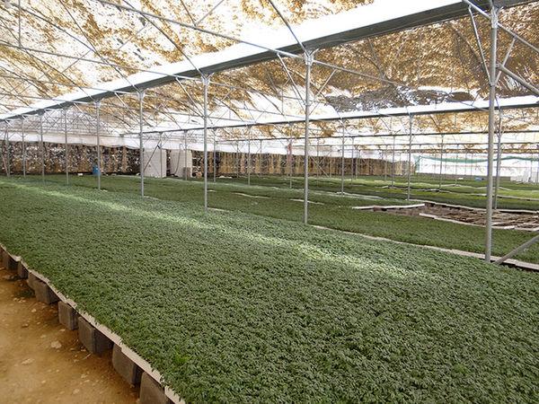 29طرح کشاورزی در استان بوشهر افتتاح میشود