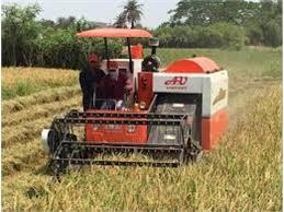 42 هزار تن برنج در میاندورود تولید شد
