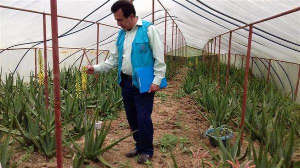 اجرای طرح گلخانههای کوچک مقیاس درشهرستان املش