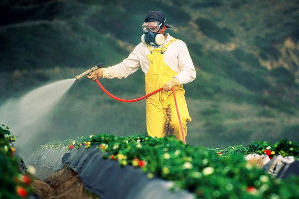 کشاورزان غرب کشور امروز مزارع را محلولپاشی نکنند