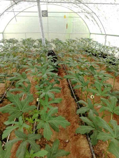 احداث گلخانههای کوچک مقیاس در فسا