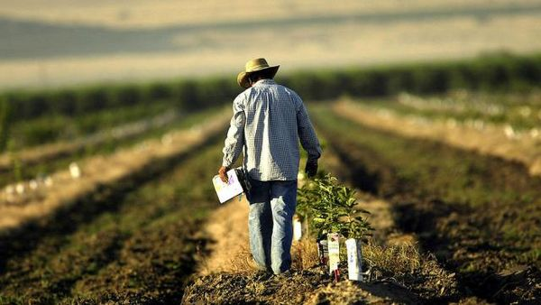 کشاورزان آمریکا آماده رقابت با غلات ارزان آمریکای لاتین میشوند