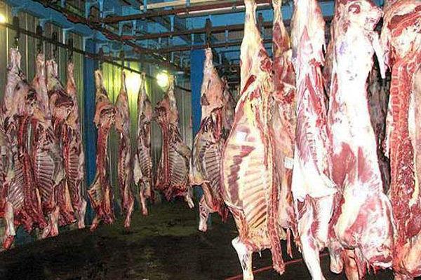افزایش تولید گوشت قزمز در خوزستان