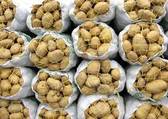 واردات 7 محصول کشاورزی به عراق ممنوع شد