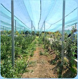 اجرای طرح سایبان باغات در سطح ۶۵۰۰ متر مربع از باغات الگویی ارومیه