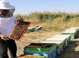 اشتغال بالغ بر چهار هزار و ۲۰۰ نفر در صنعت عسل استان اصفهان