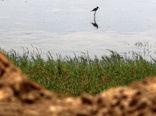 گیاهان بومی هوای خوزستان را صاف میکند