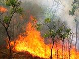 رسیدگی فوری به حیاتوحش آسیب دیده در آتشسوزی جنگلهای زاگرس