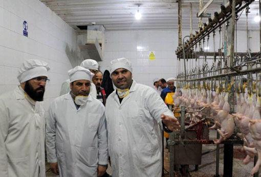 طرح ارتقای بهداشتی کیفیت گوشت مرغ ، به سود تولید کننده و مصرف کننده است