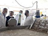 هدفگذاری اداره کل شیلات بر جهش تولید میگو در شهرستان آبادان