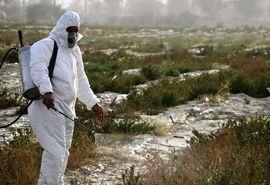 مبارزه با ملخ های صحرایی در سطح 1 میلیون هکتار از اراضی