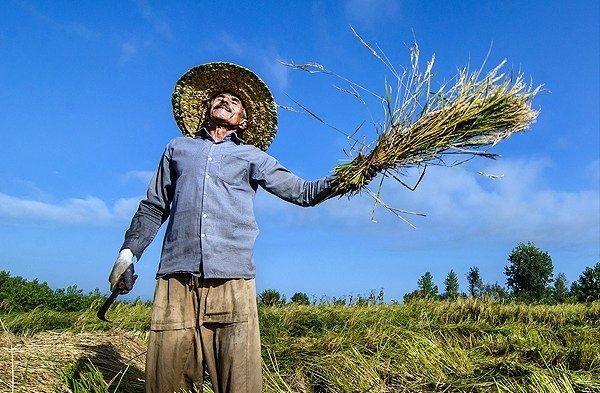 تشکلهای بخش کشاورزی همواره در کنار کشاورزان باشند