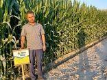 کاشت بیش از 4 هزار هکتار ذرت در فسا