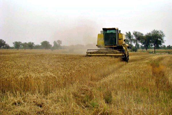 گام های مورد نیاز برای توسعه سریع بخش کشاورزی پاکستان
