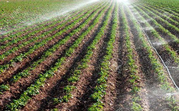 اینجا کشاورزی کنار مینها رونق میگیرد