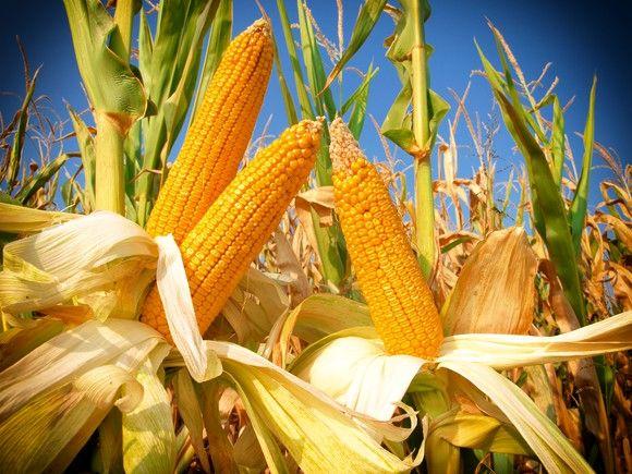 سه سهام برتر کشاورزی برای خرید در سال 2017