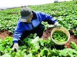 فرآوری 400 هزار تن محصولات خام کشاورزی و دامی در چهارمحال و بختیاری