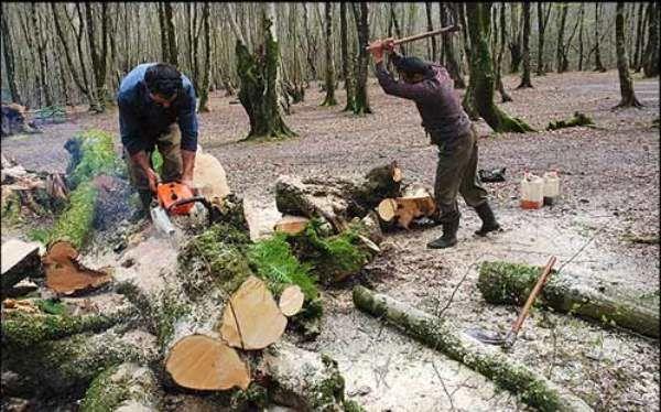 قطع درختان در جنگلهای هیرکانی منجر به ایجاد آشفتگی در جریان چرخه آب میشود