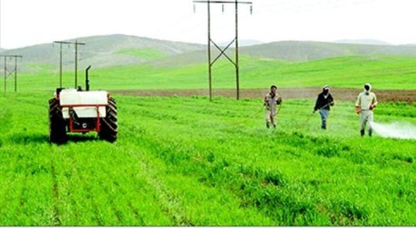 مبارزه با آفات گیاهی در 220 هزار هکتاراز اراضی کشاورزی آذربایجان غربی